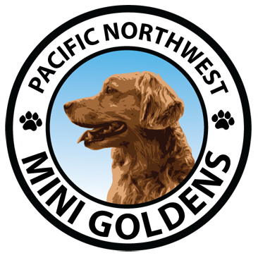 Washington Mini Goldens logo