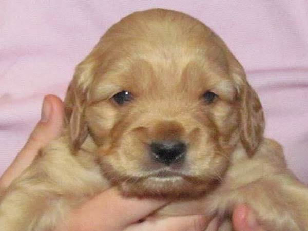 Washington Mini Goldens Eva bone