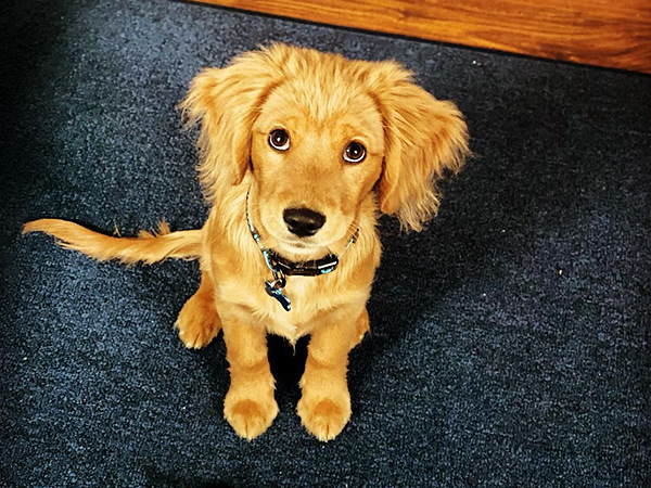 Washington Mini Goldens Eva